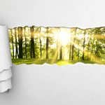 gray torn paper and green forest background